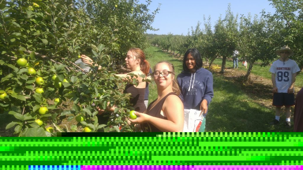 Des usagers du service de répit à la ferme de Rougemont font la cueillette des pommes à l'automne