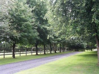 laneway_trees